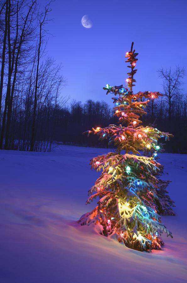 christmas decoration photograph christmas tree outdoors under moonlight by carson ganci
