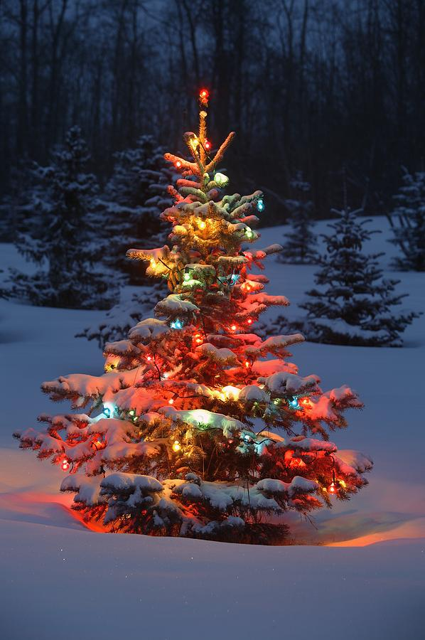 Outdoor Christmas Tree With Lights.Christmas Tree With Lights Outdoors In