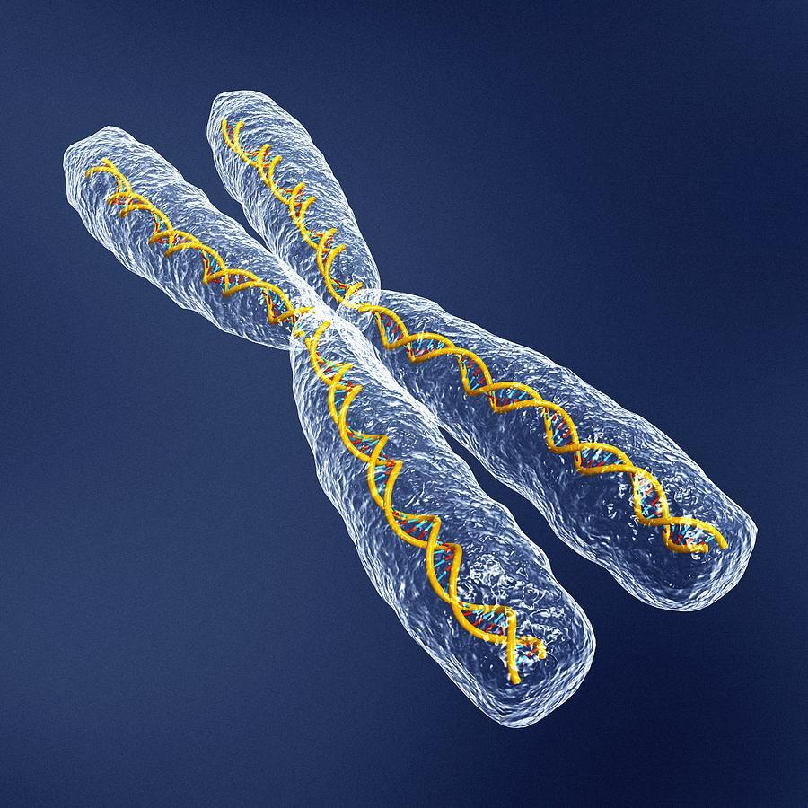 Chromosom Dna