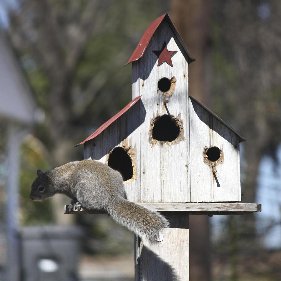 Squirrel Photograph - Chubby by Teresa Mucha