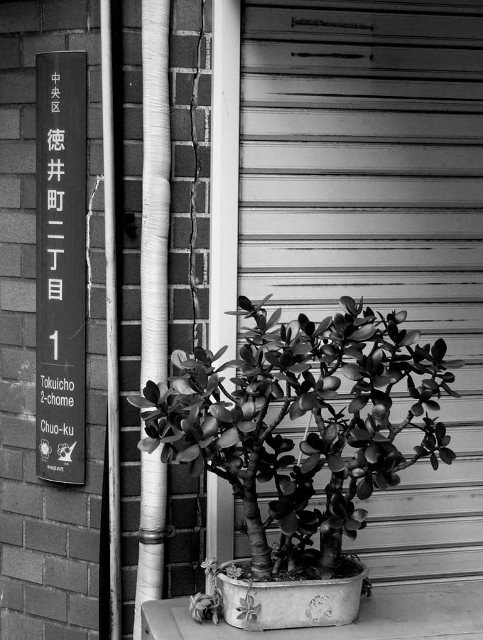 Chuo-ku Photograph - Chuo-ku money-plant by Baato