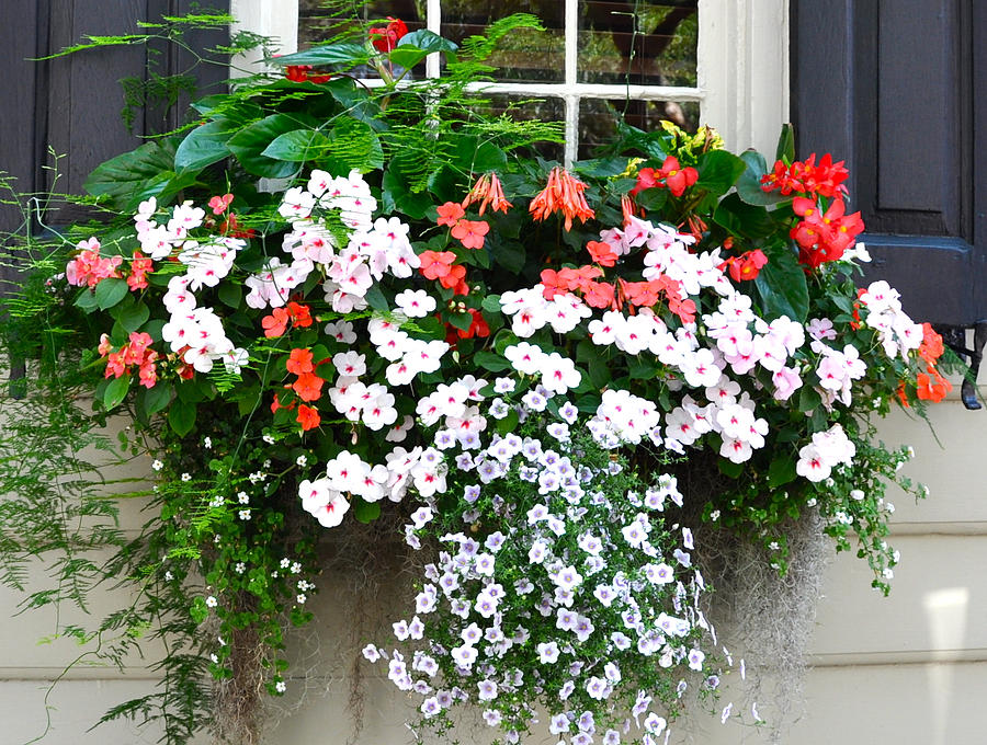 Church Street Window Box Photograph by Lori Kesten