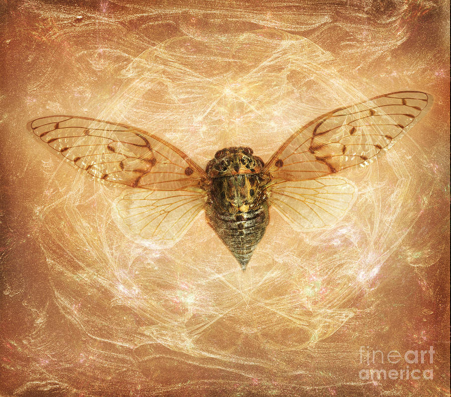 Cicada Photograph - Cicada In Amber by Janeen Wassink Searles