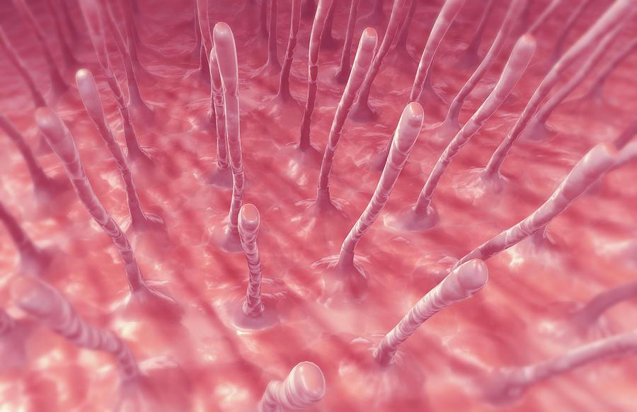 Cilia Photograph by MedicalRF.com