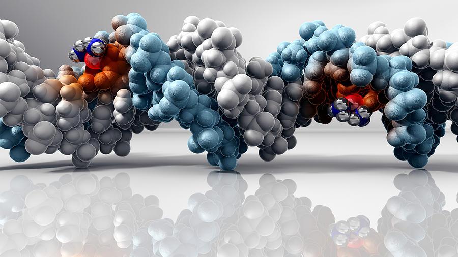 Dna Photograph - Cisplatin Cancer Drug And Dna Molecule by Phantatomix