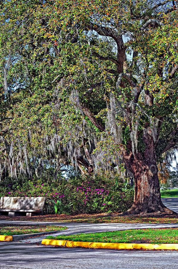 City Park Photograph