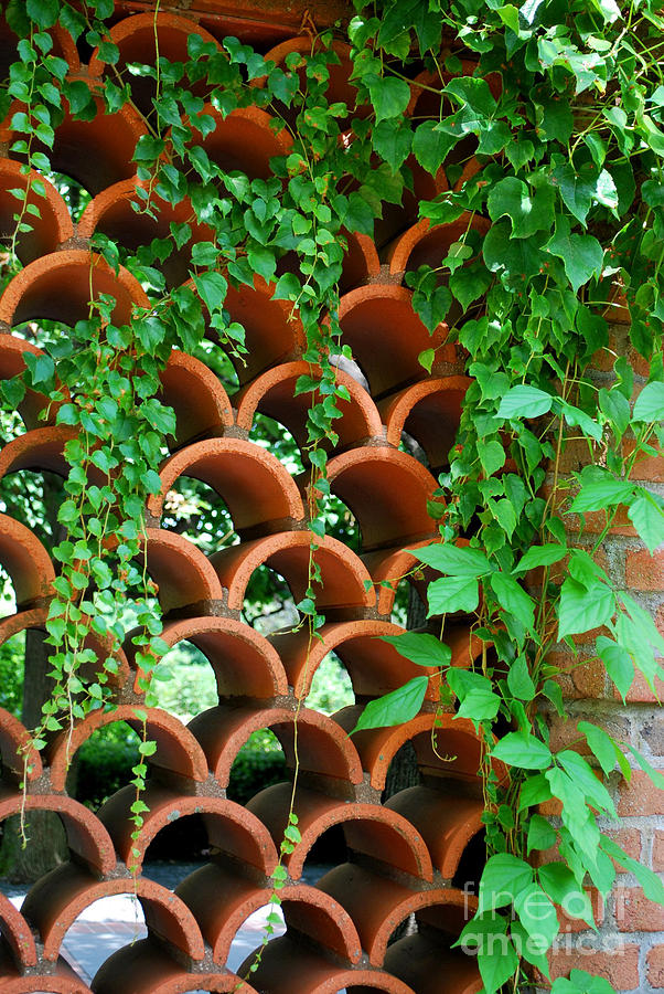 Clay Photograph - Clay Pattern Wall With Vines by Nancy Mueller