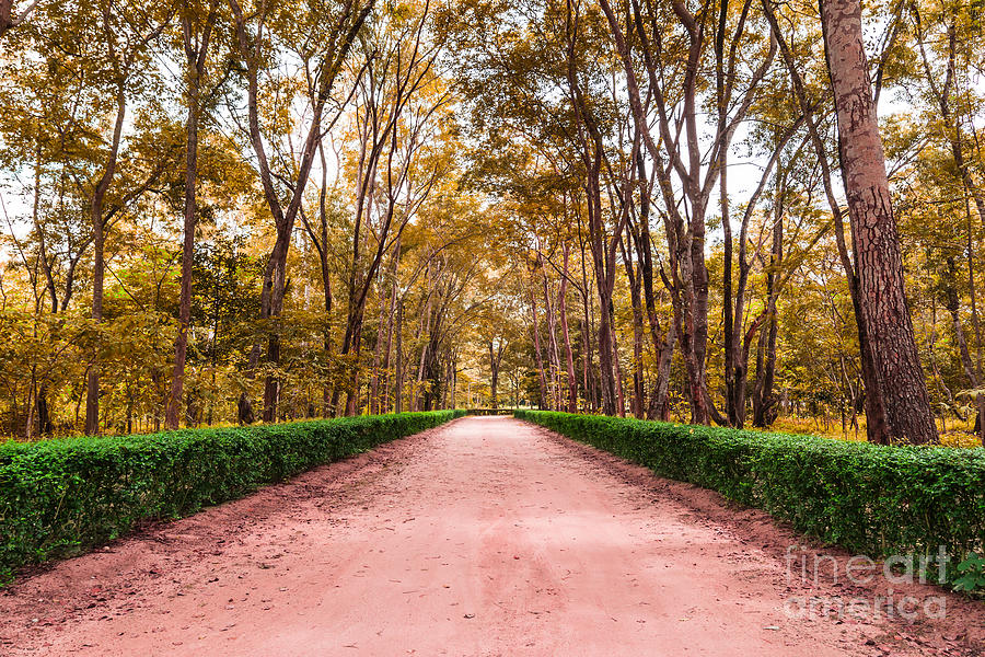 Antique Photograph - Clay Road In The National Park by Mongkol Chakritthakool