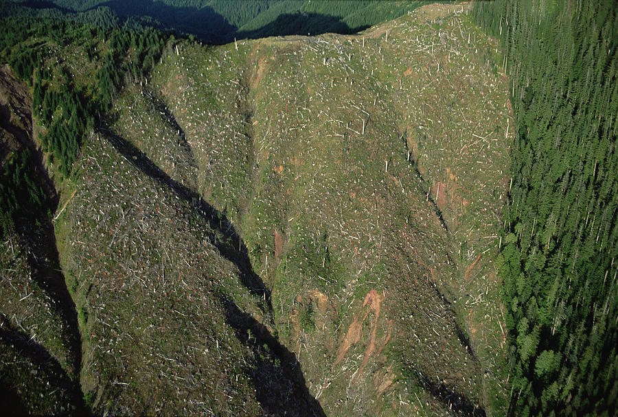 Clear Cutting, Olympic National Park Photograph by Mark Moffett