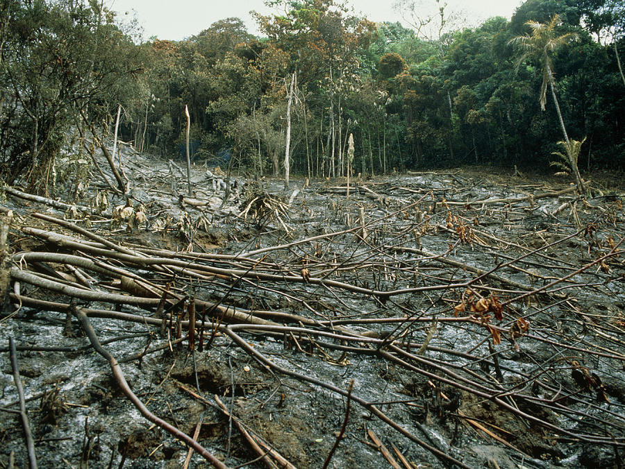 Clearing Of The Rainforest (deforestation) Photograph by Dr Morley ...
