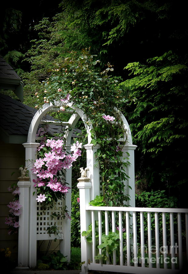 Flowers Photograph - Clematis Arch by Tanya  Searcy