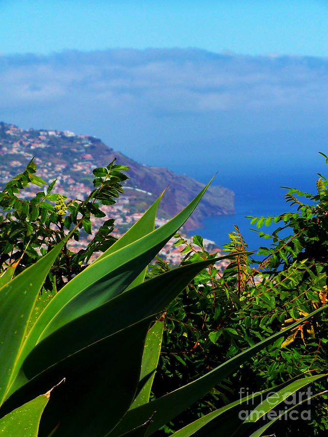 Madeira Photograph - Cliffs Of Madeira by Patricia Land