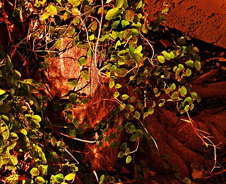 Natural Photograph - Climbing Magic Plant by Susana Sanchez Giraud
