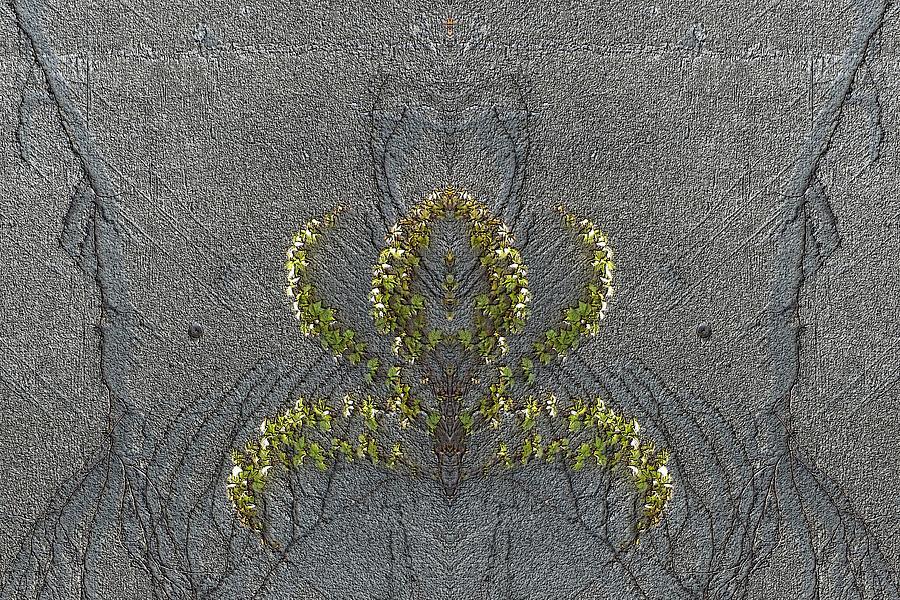 Ivy Digital Art - Climbing The Walls by Tim Allen