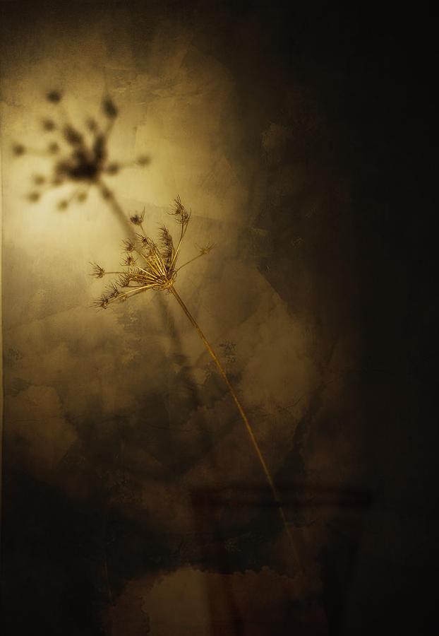 Field Photograph - Clone by Dmitriy Mirochnik
