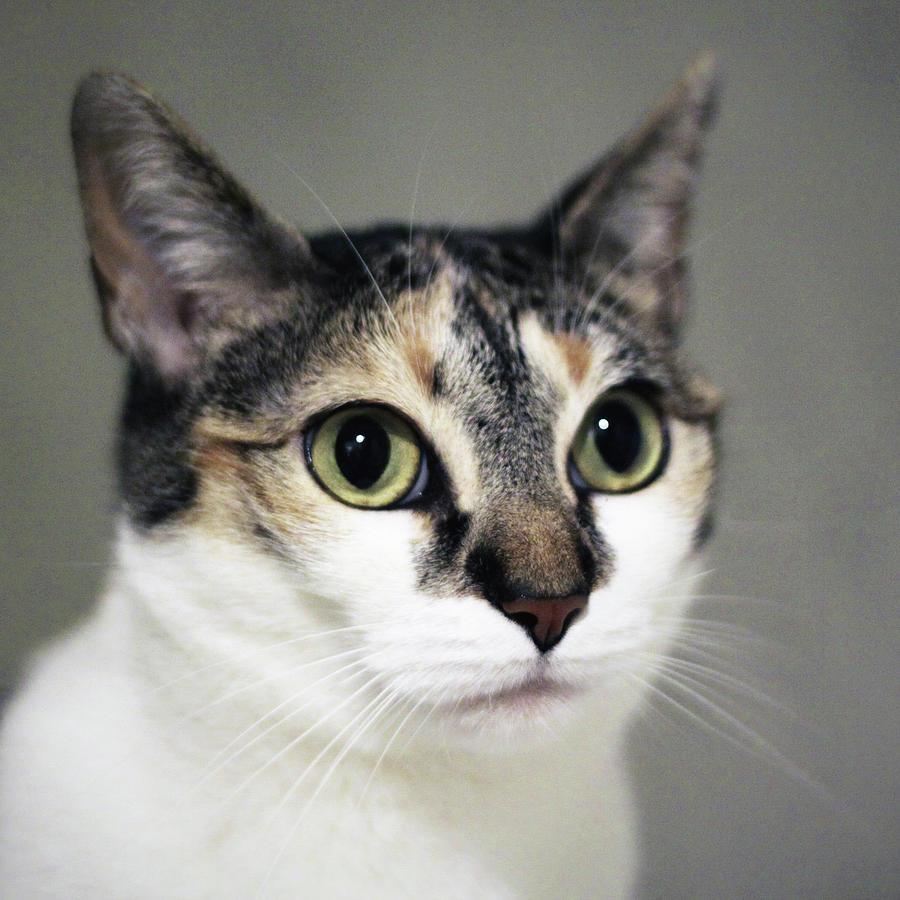 Square Photograph - Close Up Of Cat by Saulgranda