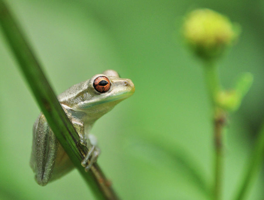 Horizontal Photograph - Close Up Of Frog by Lon Fong Martin