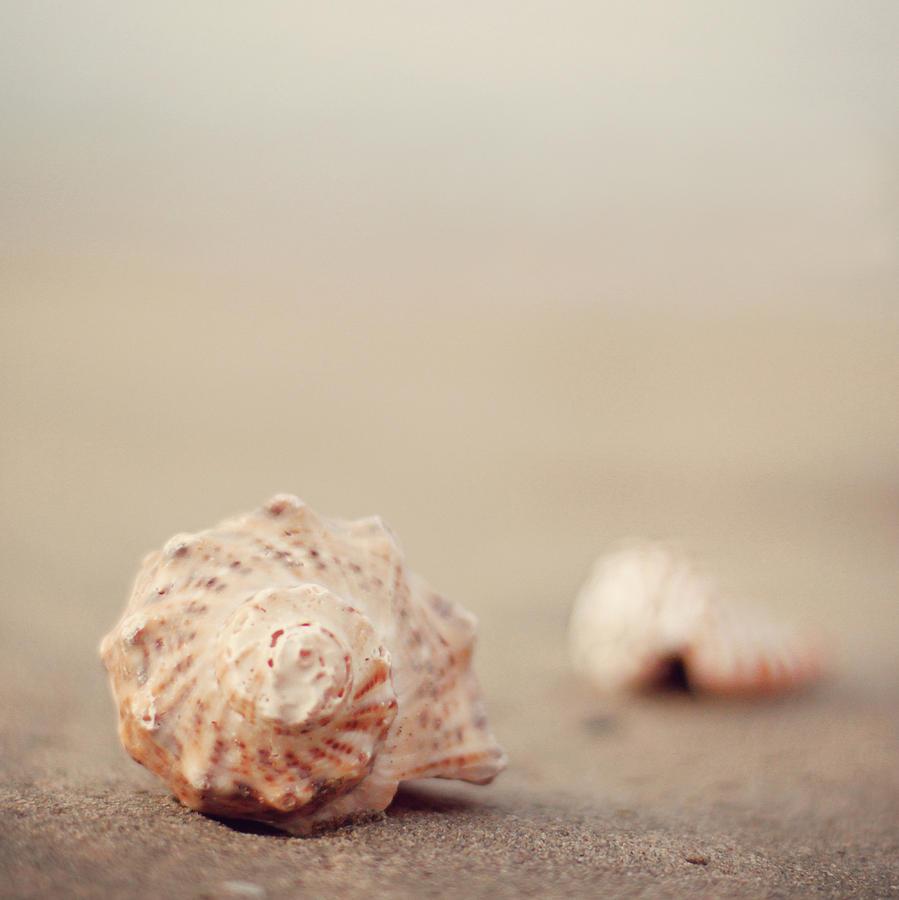 Vertical Photograph - Close Up Of Shells On Beach by COPYRIGHT© Marianna Di Ferdinando