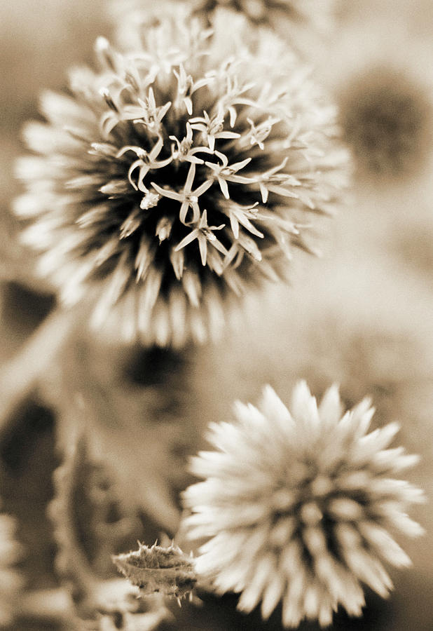 Vertical Photograph - Close-up Of Spiky Plants by Andrea Sperling