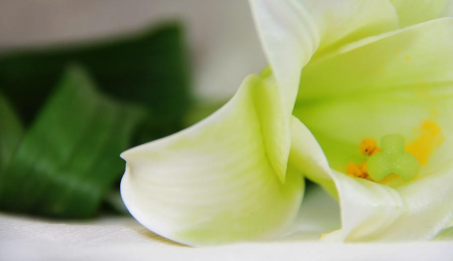 White Lily Flower Photograph - Close-up On White Lilies by Gal Ashkenazi
