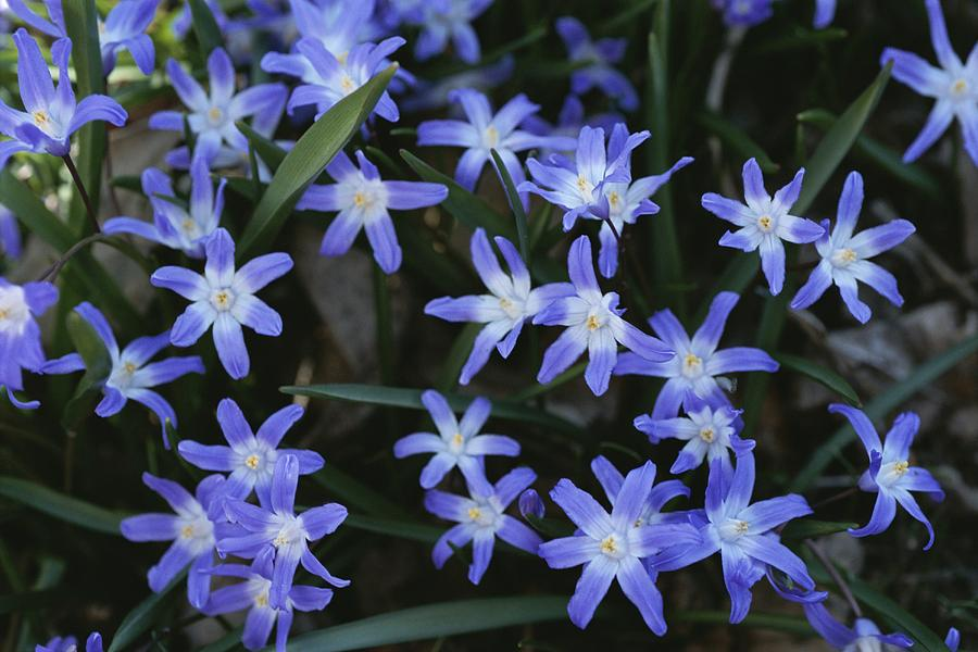 Plants Photograph - Close View Of Spring Flowers by Darlyne A. Murawski