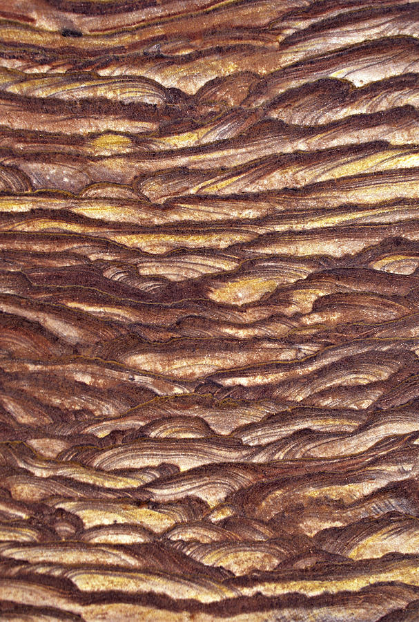 Vertical Photograph - Closeup Of Sandstone Patterns, Petra, Jordan by Fred Bruemmer