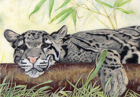 Bamboo Painting - Clouded Leopard by Inger Hutton