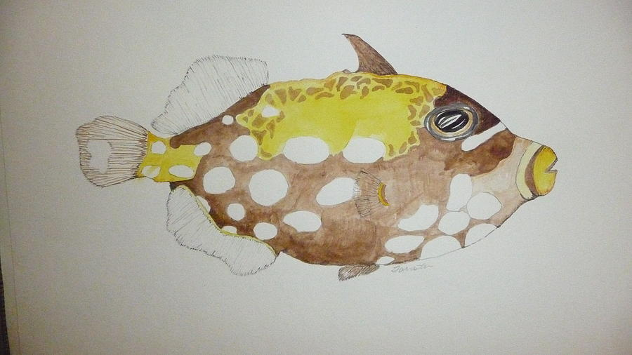 Nature Painting - Clown Triggerfish by Tim Forrester