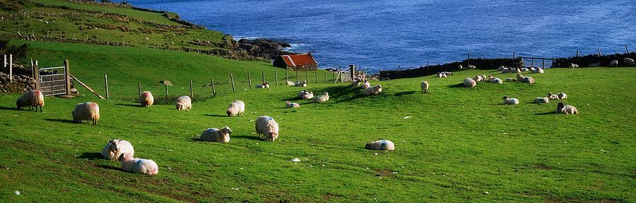 Animals Photograph - Co Cork, Beara Peninsula by The Irish Image Collection