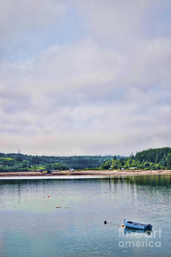 Coastal Life by Traci Cottingham