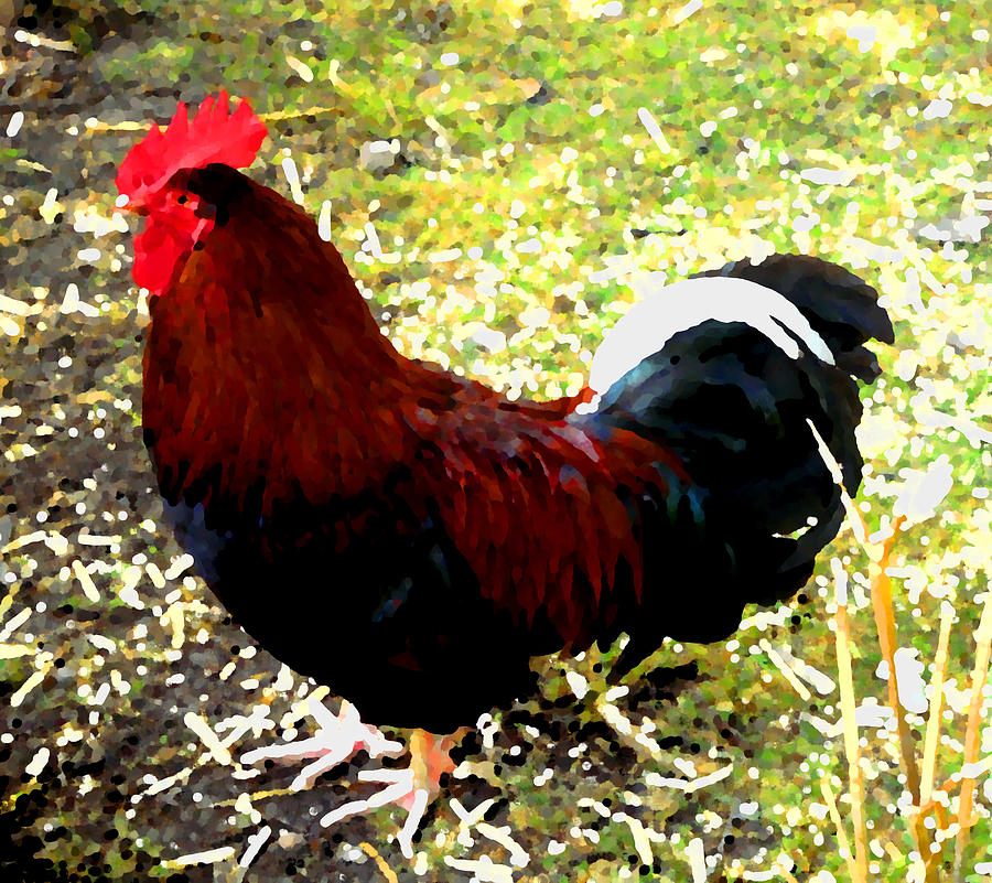 Cock Photograph - Cock by Roberto Alamino