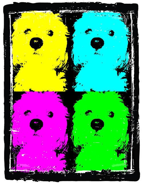 Pets Photograph - Coco Warhole by Pani Kazemi