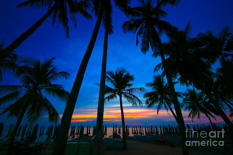 Back Photograph - Coconut Trees Silhouette At Sunset by Phalakon Jaisangat