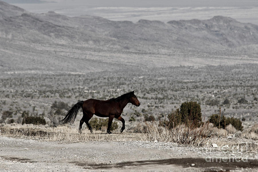 Horse Photograph - Cold Creek Mustang by Lori Bristow