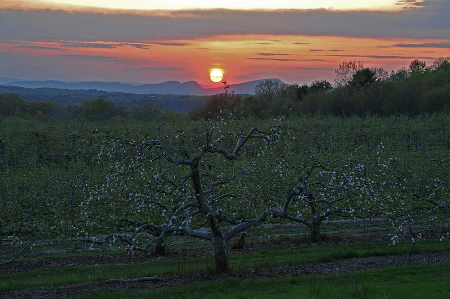 Orchard Photograph - Cold Spring Orchard by Mike Martin