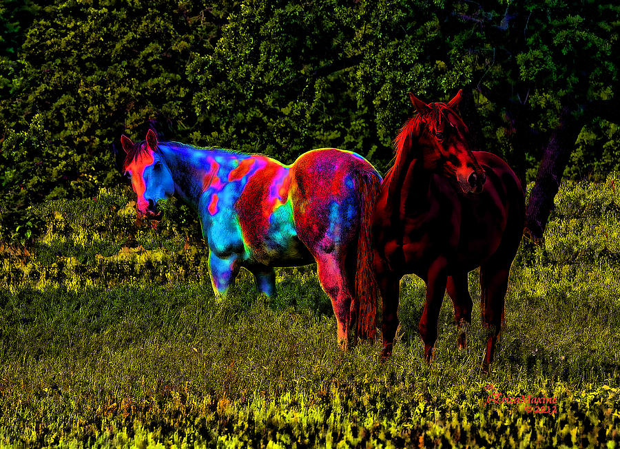 Color Blind Photograph by Ericamaxine Price