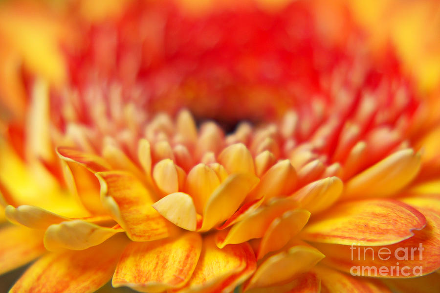 Flower Photograph - Color Of Summer II by Angela Doelling AD DESIGN Photo and PhotoArt