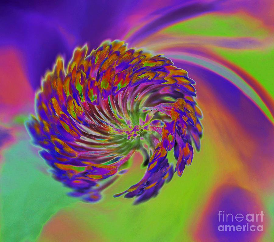 Flower Photograph - Color Splash by Cindy Manero