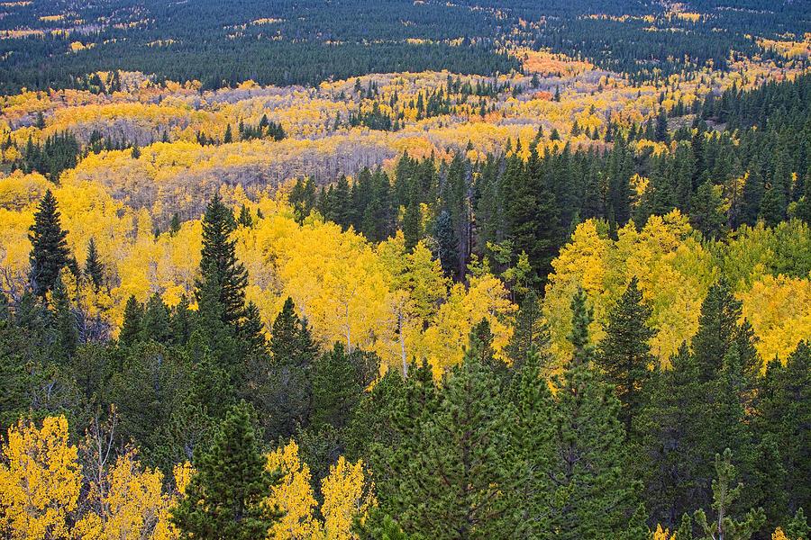 Autumn Photograph - Colorado Autumn Aspens Boulder County  by James BO  Insogna