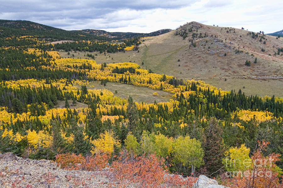 Colorful Photograph - Colorado Autumn Aspens Colors by James BO  Insogna