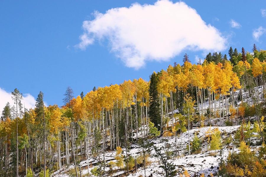 Autumn Landscape Photograph - Colorado Autumn by Sharon I Williams