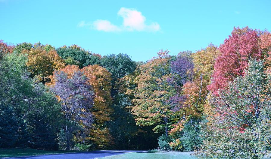 Fall Photograph - Colored Trees by Dyana Rzentkowski