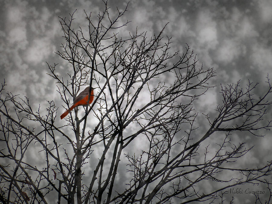 Nature photograph colorful bird in tree on black and white by mikki cucuzzo
