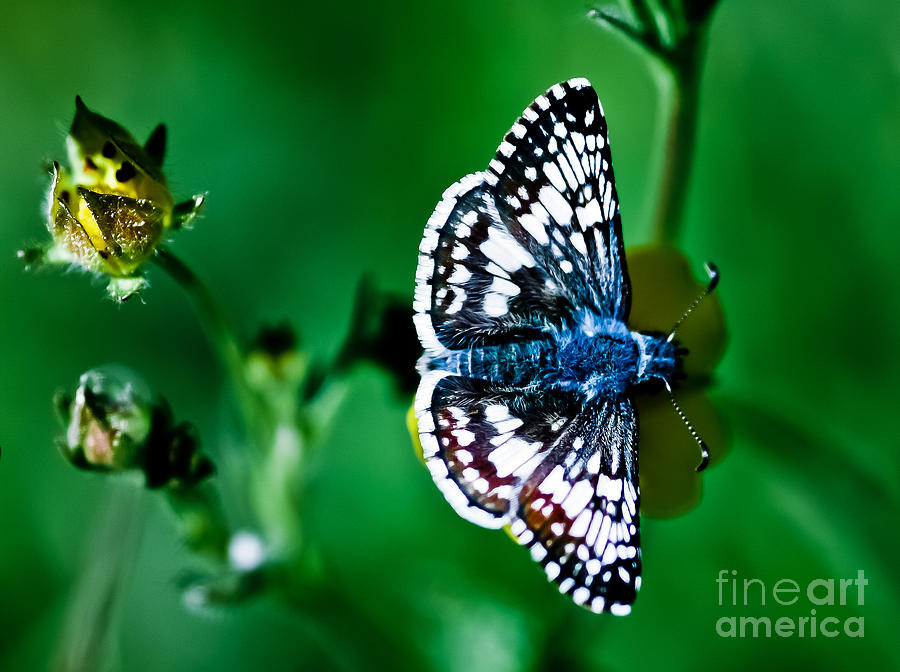 Colorful Butterfly Photograph - Colorful Butterfly by Mitch Shindelbower