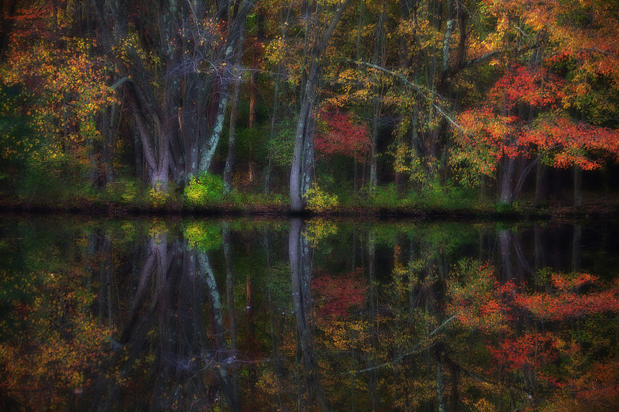 Woods Photograph - Colorful Forest by Karol Livote