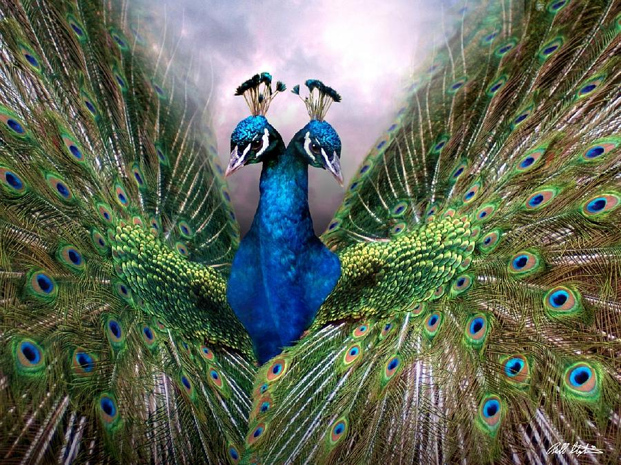 Birds Digital Art - Colorful Friendship by Bill Stephens