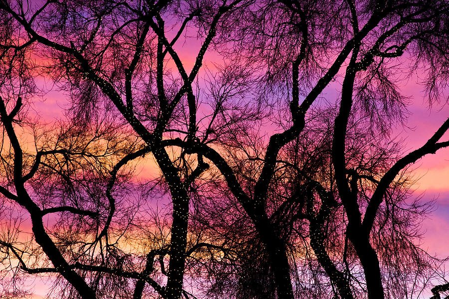 'canvas Art' Photograph - Colorful Silhouetted Trees 21 by James BO  Insogna