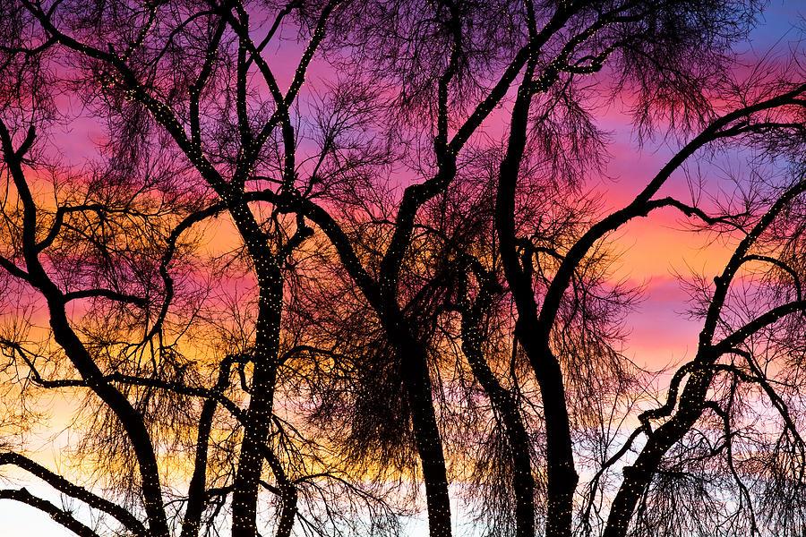 Christmas Light Photograph - Colorful Silhouetted Trees 27 by James BO  Insogna