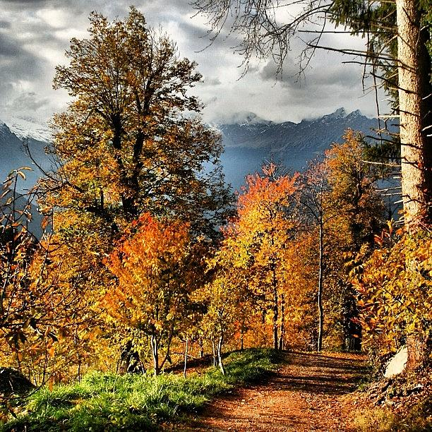 Outdoor Photograph - Colori Dautunno by Luisa Azzolini
