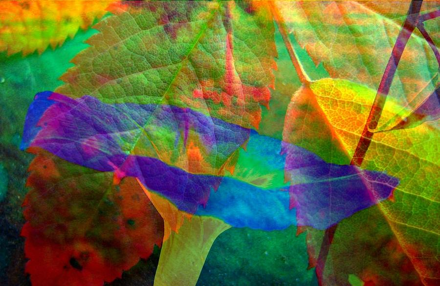 Abstract Photograph - Colors Of Autumn by Shirley Sirois